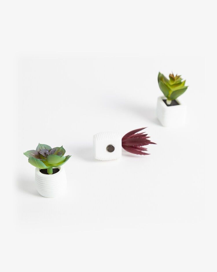 Cover Image For SUCCULENT MAGNET 3PACK